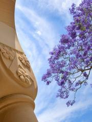 artistic photo of jacaranda, sandstone column and sky in UQ's Great Court